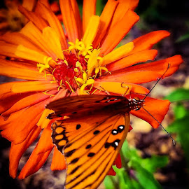 by Anne LiConti - Instagram & Mobile Android ( #visitor, #butterfly )