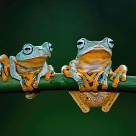 you and I by Robert Cinega - Animals Amphibians