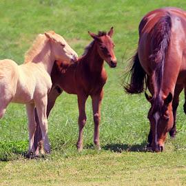 by Steve Tharp - Animals Horses