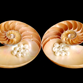divorced by Adjie Tjokrosoedarmo - Artistic Objects Still Life ( pearls, seashell, sea, nautilus, beach )