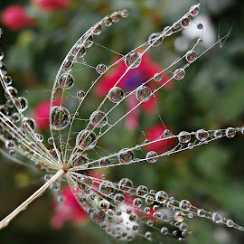 Waiting Embrace Of Wind by Marija Jilek - Nature Up Close Natural Waterdrops