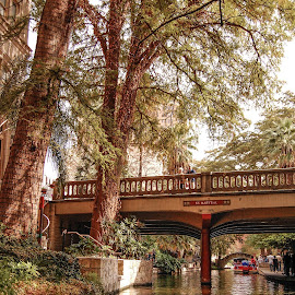 The River Walk by Robert Coffey - City,  Street & Park  Historic Districts ( texas, san antonio, trees, bridge, boat, river )