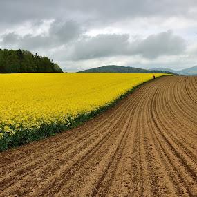 Lost memories by Silva Predalič - Landscapes Prairies, Meadows & Fields ( field, sky, yelow, eternity, lines, brown, spring, rape seeds,  )