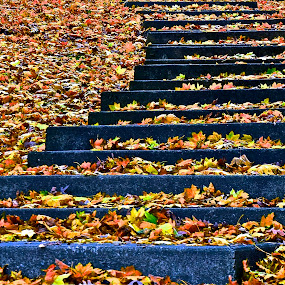 by Diana Margan - Nature Up Close Leaves & Grasses ( fall leaves on ground, fall leaves )
