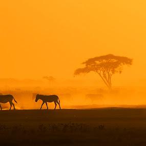 Zebra Crossing by Heather Allen - Landscapes Sunsets & Sunrises (  )
