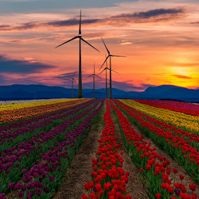 tulips 2 by Gigi Kent - Flowers Flower Gardens