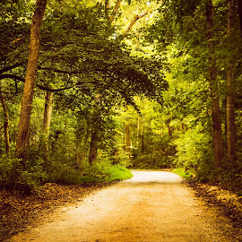 What Lies Ahead by Jennifer  Loper  - Landscapes Forests ( green, tree-lined road, leaves, trees, dirt road )