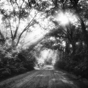 Headed Down That Dusty Trail by Roger Armstrong - Landscapes Sunsets & Sunrises ( monochrome, black and white, sunrise, morning, trails, roads, sun )