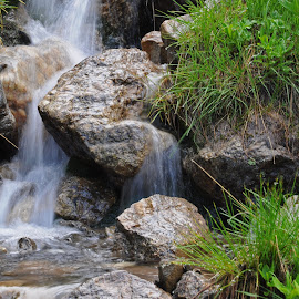 Seasonal Stream in Forest Canyon by Marko Ginsberg - Nature Up Close Water ( grass, seasonal stream, forest canyon, small waterfall )