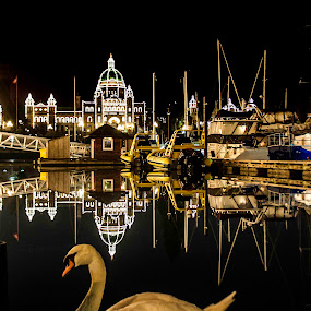 Legislature Buildings and swan by Doug Clement - Travel Locations Landmarks ( lights, parliament, pwclandmarks, buildings, swan, victoria, legislature )