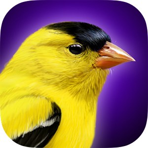 iBird Yard Plus Guide to Birds For PC / Windows 7/8/10 / Mac – Free Download