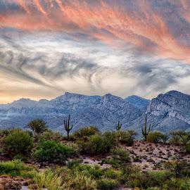 Nexus by Charlie Alolkoy - Landscapes Deserts ( oro valley, mountain, desert, sunset, arizona, sunrise, cactus )