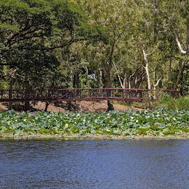 The Walkbridge by Deborah Bisley - City,  Street & Park  City Parks ( red bridge, water plant, waterlily, park, trees, bridge, river )