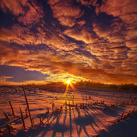 All the Things that I'd Like to Say by Phil Koch - Landscapes Prairies, Meadows & Fields ( vertical, travel, yellow, love, sky, nature, snow, weather, light, orange, trending, colors, perpective, art, twilight, mood, journey, horizon, portrait, country, environment, winter, dawn, season, serene, outdoors, trees, lines, inspiratio  nal, natural, hope, wisconsin, ray, joy, beauty, landscape, sun, photography, life, ice, emotions, dramatic, horizons, inspired, clouds, office, park, heaven, beautiful, scenic, living, morning, b  lue, shadows, field, unity, sunset, amber, peace, meadow, beam, earth, sunrise,  )