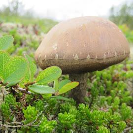 by Áslaug Óttarsdóttir - Nature Up Close Mushrooms & Fungi