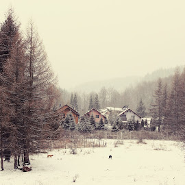 Winter in town by Alin Dorobantu - Landscapes Forests ( winter, cold, ice, snow, white, snowflake, forest )
