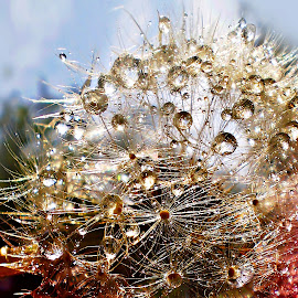 Bring Me Joy by Marija Jilek - Nature Up Close Natural Waterdrops