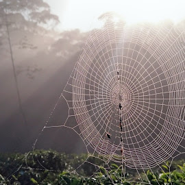 spider web by Sampath Heenatimulla - Nature Up Close Hives & Nests
