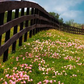 Primrose by Brenda Shoemake - Flowers Flowers in the Wild (  )