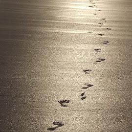 Footprint by Dibyendu Purkait - Nature Up Close Sand
