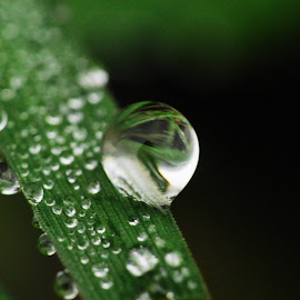 by Jade Bracke - Nature Up Close Water ( water, macro, nature, drop, photography )