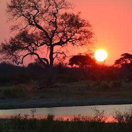 Sunset at Dete by Patricia Chapple - Landscapes Sunsets & Sunrises ( #hwange, #sunset, #dete, #zimbabwe, #africa,  )