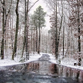 First Snow by Megan Donovan - Landscapes Weather ( cest moi artful imaging, pwcwinter, winter, snow, virginia, landscape )