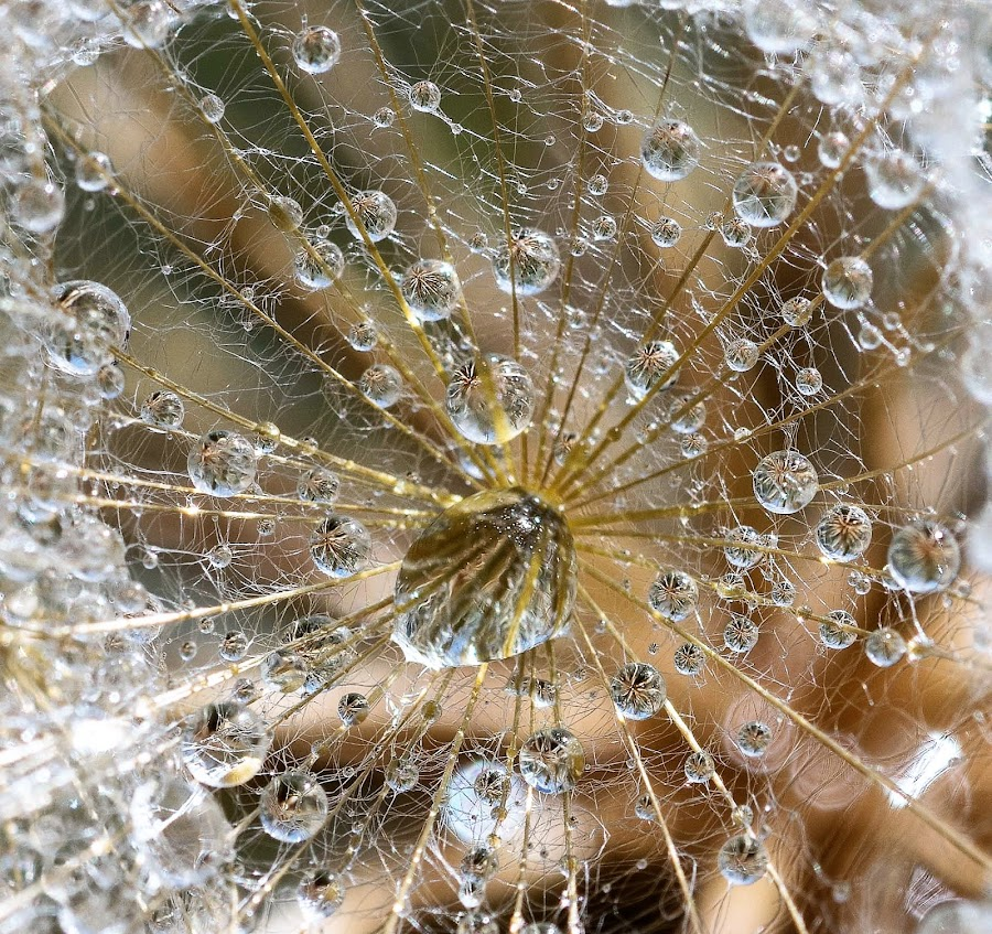 Gotas by Lourdes Ortega Poza - Abstract Water Drops & Splashes ( gotas, agua, primavera, flor, naturaleza, lluvia )