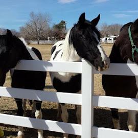 by Sarah Mayhew - Animals Horses