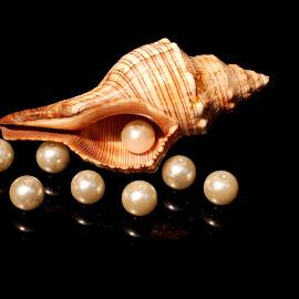 eye in the sky by Adjie Tjokrosoedarmo - Artistic Objects Still Life ( pearls, seashell, sea, conch shell, beach )