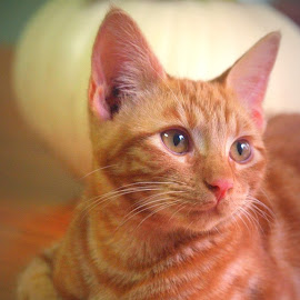 Mars by Brenda Shoemake - Animals - Cats Portraits