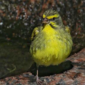 A little birdie told me by Johann Bekker - Novices Only Wildlife