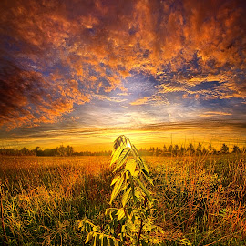 Set Free by Phil Koch - Landscapes Prairies, Meadows & Fields ( vertical, wisconsin, ray, country living, yellow, phil   koch, leaves, landscape, spring, photography, sun, farm, life, sky, tree, nature, barn, weather, perspective, country life, horizons, flowers, light, office, clouds, orange, wild, park, purple, heaven, twilight, art, horizon, scenic, portrait, shadows, field, red, blue, amber, sunset, meadow, trees, beam, lines, sunrise, garden )