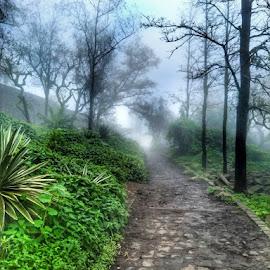 Sinhgad .,Pune by Rahul Patekhede - Instagram & Mobile Android ( #insta_maharashtra, #official_photography_hub, #instagram, #natgeotravel, #travel )