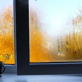 Dew on the window by Zenonas Meškauskas - Artistic Objects Other Objects ( window, autumn, dew, yellow, leaves )