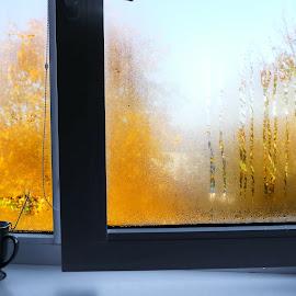Dew on the window by Zenonas Meškauskas - Artistic Objects Other Objects ( window, autumn, dew, yellow, leaves )