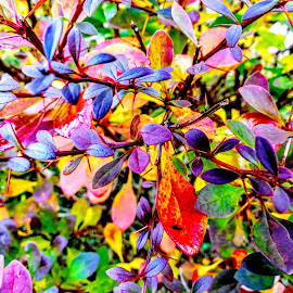 Autumn Colourful Foliage  by Ian Popple - Abstract Patterns ( colourful, autumnal, foliage, leaves )