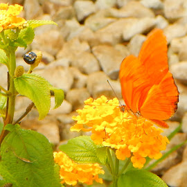 Julia Heliconian Butterfly 5 by Kristine Nicholas - Novices Only Wildlife ( butterfly, orange, green, yellow, insect, insects, leaves, macro, nature, butterflies, bugs, nature up close, bug, flowers, rocks, flower, berries )