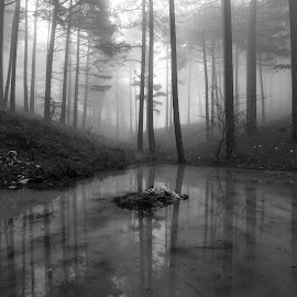 Heart of the forest by Grigoris Koulouriotis - Black & White Landscapes ( water, pines, foggy, winter, black and white, reflections, trees, forest, landscape, misty )