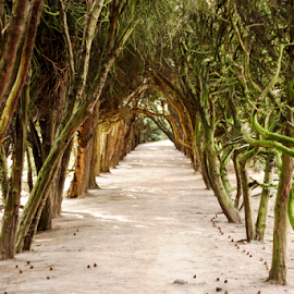 Hall of Trees by Adorjan Seres - Nature Up Close Gardens & Produce ( hall, green, trees, garden,  )