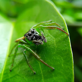 green jumper by Hendrata Yoga Surya - Instagram & Mobile Android ( jumping spider, arachnid, laba laba, jumper )