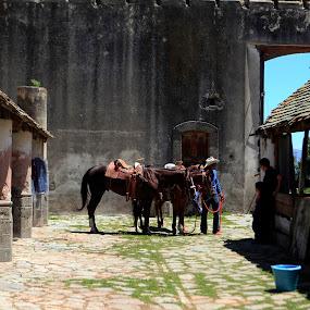 Hacaienda by Cristobal Garciaferro Rubio - Buildings & Architecture Public & Historical ( hacienda, horse )