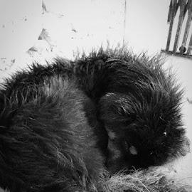 by Soumyadip Ghosh - Black & White Animals