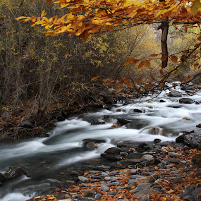 Autumn River by Cornelis Cornelissen - Nature Up Close Water ( orange, moving water, stream, guejar sierra, sierra nevada, autumn, rio genil, river )
