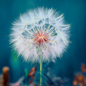 Geometry by Χρήστος Λαμπριανίδης - Nature Up Close Flowers - 2011-2013