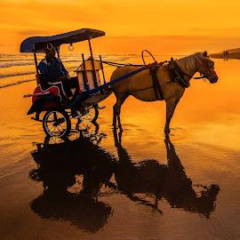 by Luna Almira  Ali - Transportation Other