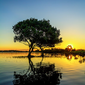 Tree of Knowledge by Andy Hutchinson - Landscapes Waterscapes