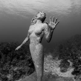 Amphitrite by Pat Sinclair - Buildings & Architecture Statues & Monuments ( sunset house, grand cayman, amphitrite, poseidon's wife, mermaid )