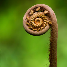 Growing plant by Mohamad Sa'at Haji Mokim - Nature Up Close Other plants ( abstract, plant, macro, wheel, grow )