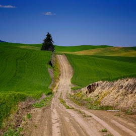 Path by Gabriel Gutierrez - Landscapes Prairies, Meadows & Fields ( field, hills, tree, path, rural )